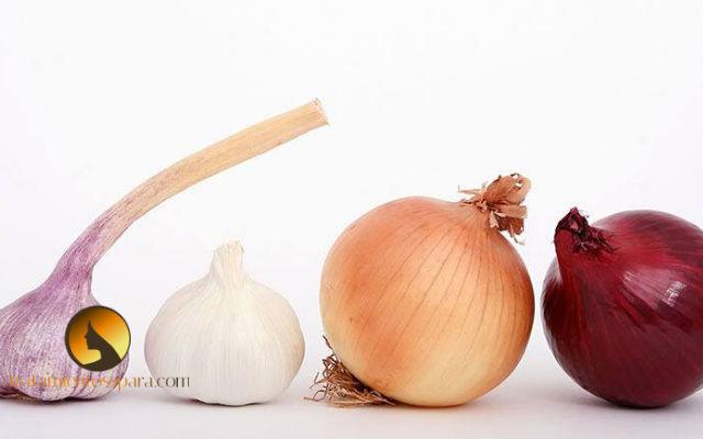 ajo y cebolla para triglicéridos altos